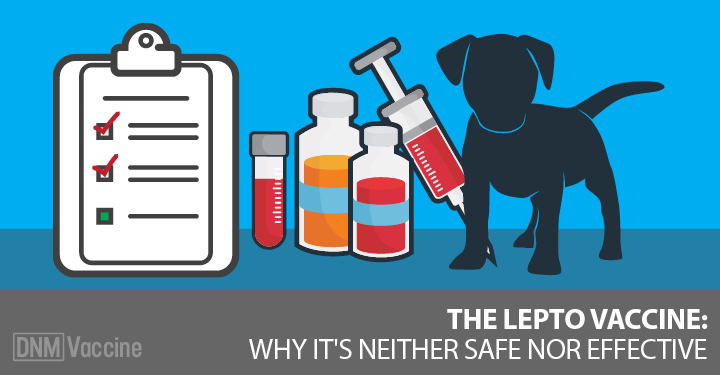 The Lepto Vaccine: Why Vets Give It Yearly.