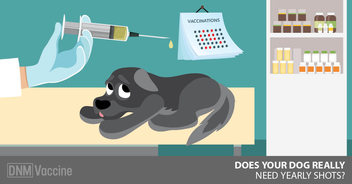 Annual Dog Vaccines: Are They Necessary? Probably Not!.