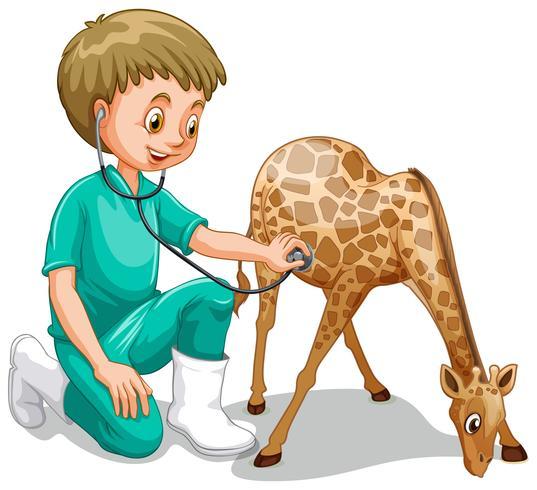 A Male Veterinarian Check Up Giraffe.