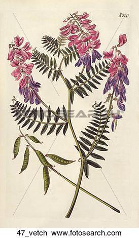 Clip Art of Antique Floral Illustration of Fine.
