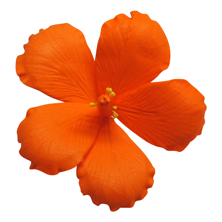 Vexx hibiscus flower clipart clipart images gallery for free.
