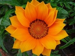 Free Flower Photo Pictures.