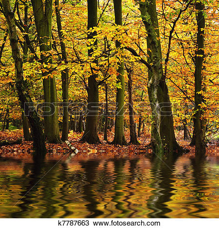 Stock Photo of Beautiful forest landscape with vibrant Autumn Fall.