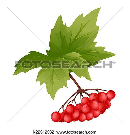 Clip Art of Branch of Viburnum k22312332.
