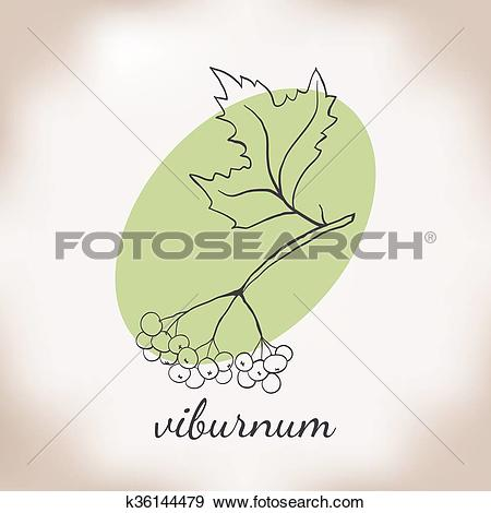 Clip Art of vector illustration viburnum. k36144479.