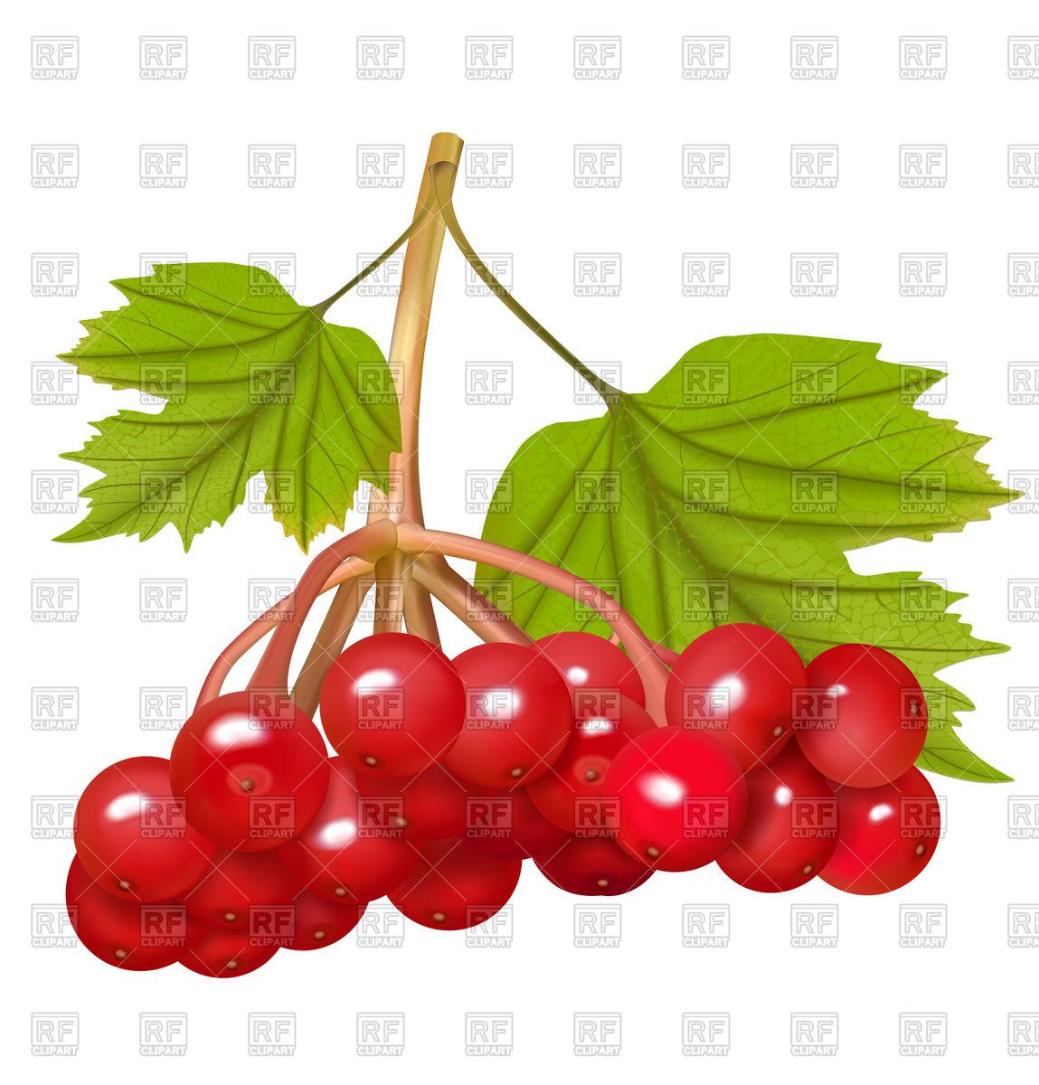 Red viburnum berries Vector Image #93852.
