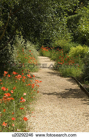 Stock Images of Gravel path bordered by red poppies (The Old.
