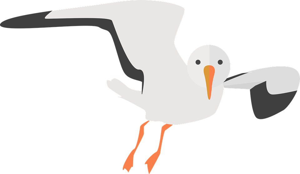 Flying Gull Victor Clipart PNG Image #16.