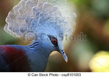 Stock Photos of Victoria Crowned Pigeon (Goura Victoria). A zoo of.