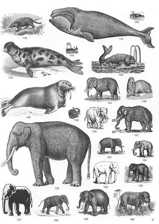 various large mammal with tusks.