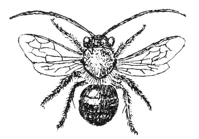 Free Vintage Bee Clip Art.