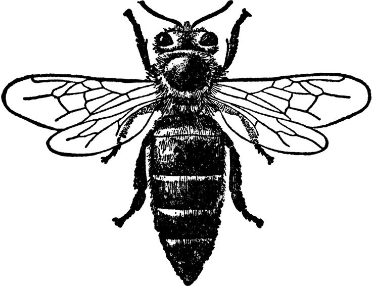 Bee clipart victorian, Bee victorian Transparent FREE for.