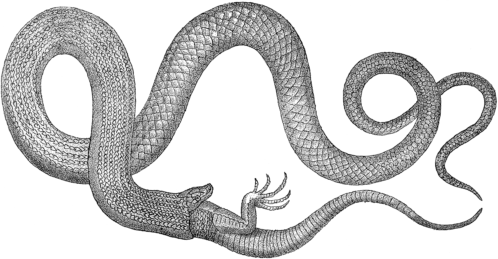 Early Vintage Snake Images.
