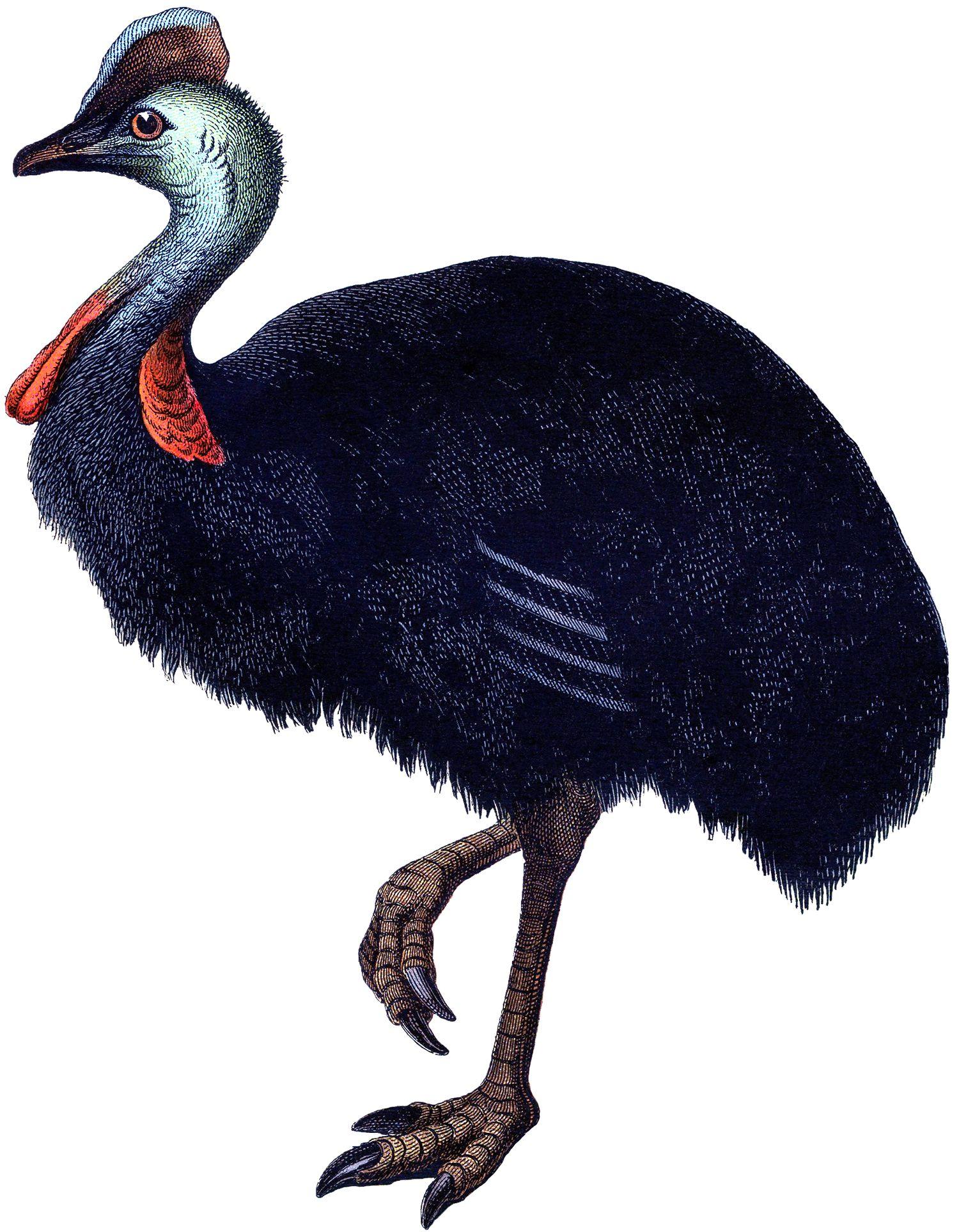 Vintage Ostrich Image 2.