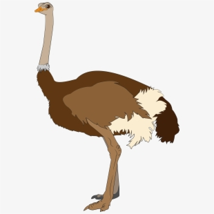 PNG Ostrich Cliparts & Cartoons Free Download.