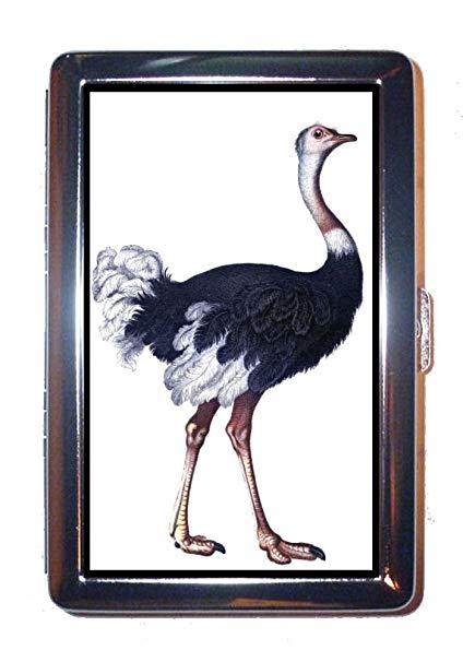 Amazon.com : Ostrich Color Victorian Nice Naturalist Art.