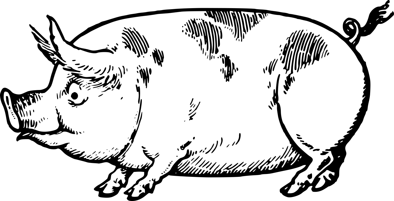 Vintage Pig Clipart.