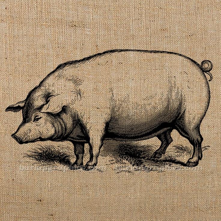 Vintage Pig Drawing at GetDrawings.com.