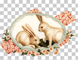 76 vintage Bunny PNG cliparts for free download.