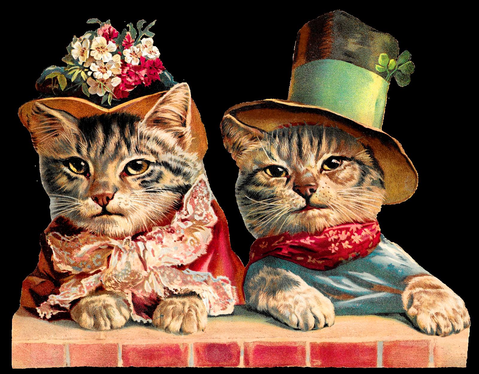 Kitten clipart tabby kitten, Kitten tabby kitten Transparent.