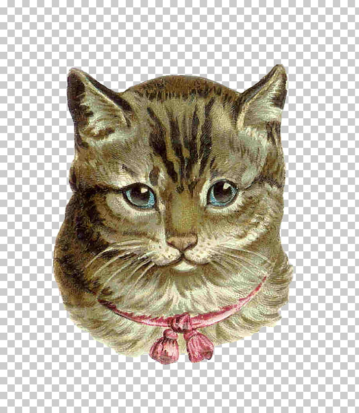 Pink cat Kitten Tabby cat , Victorian Animal s PNG clipart.