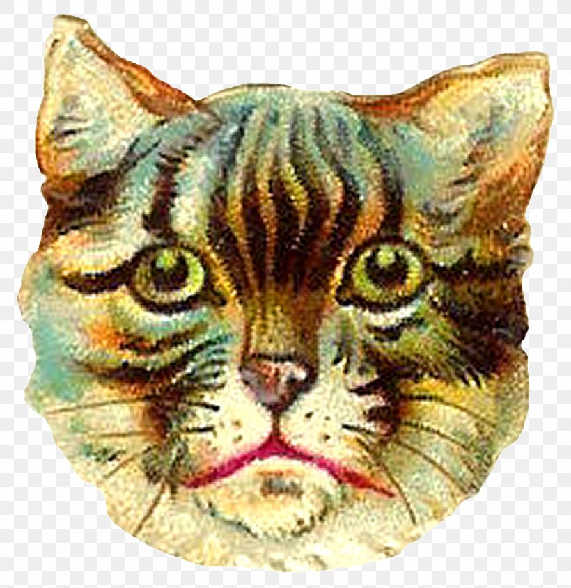 Ragdoll Kitten T.