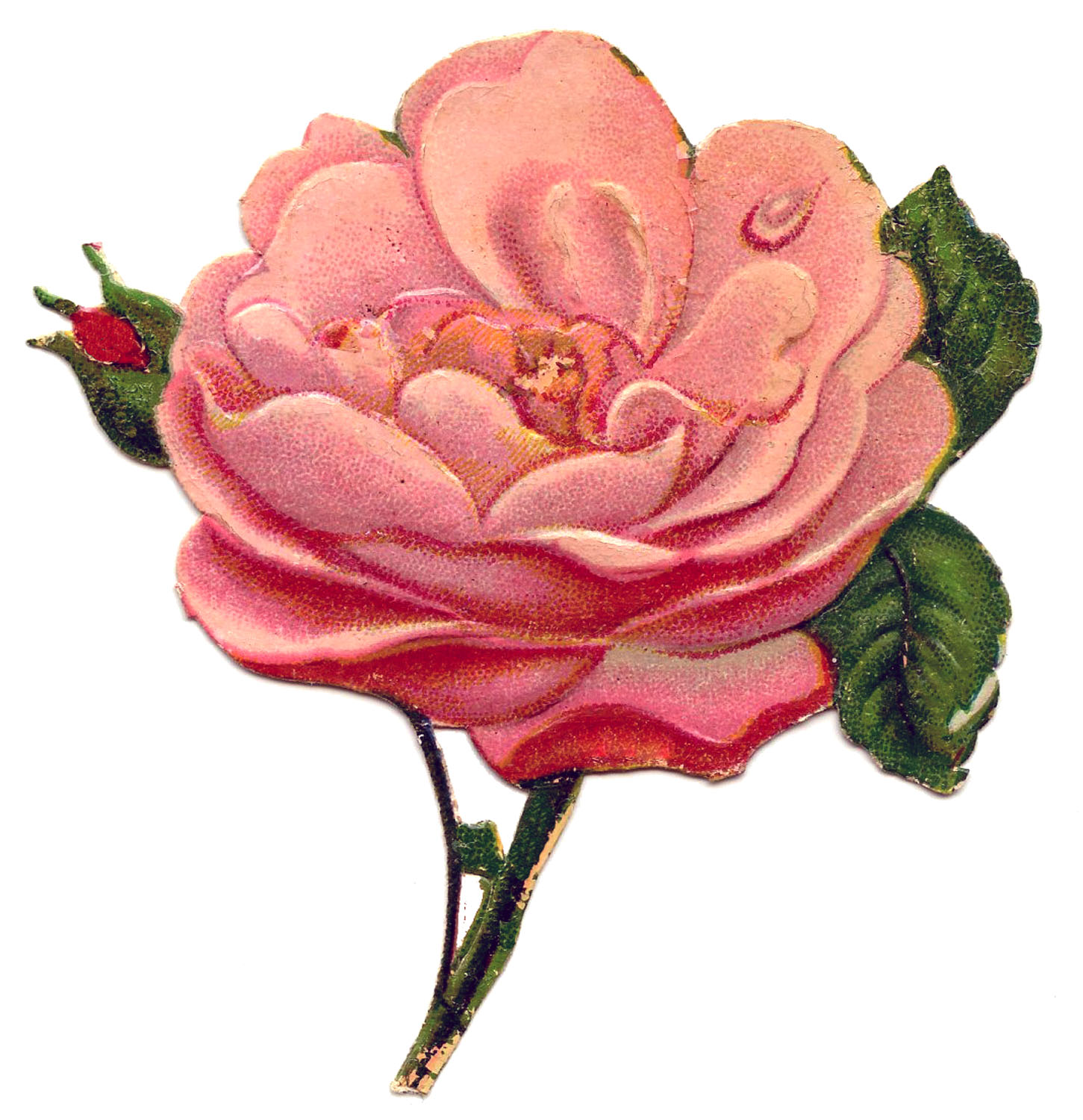 Free Victorian Rose Pictures, Download Free Clip Art, Free.