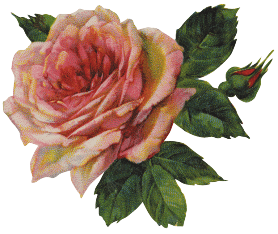 Vintage Victorian Rose Single transparent PNG.