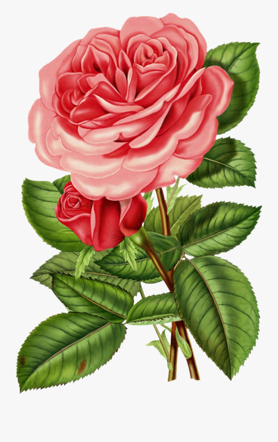 Victorian Rose Clip Art.