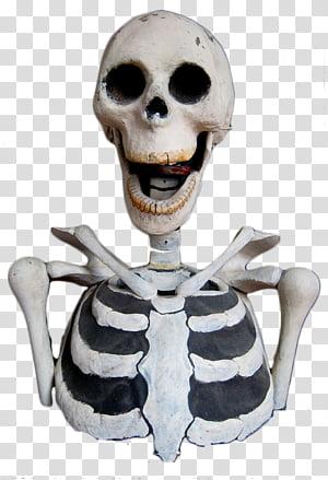 Bizarre Victorian collection, skeleton illustration.