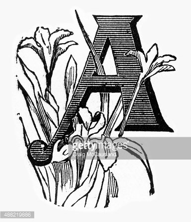 """Woodcut of a Capital """"A"""" with Orchids Victorian Engraving."""