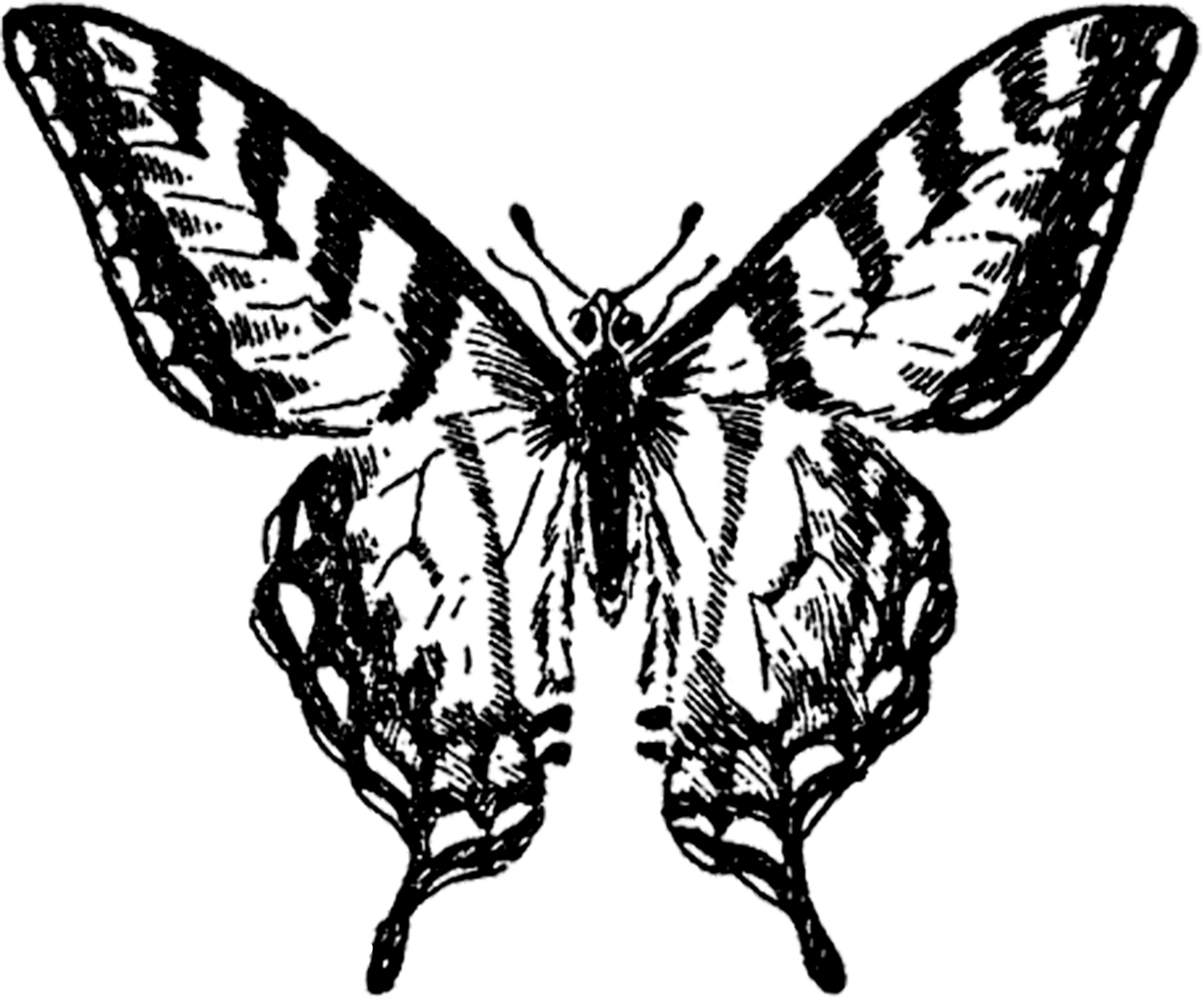 Old butterfly clipart illustrations.