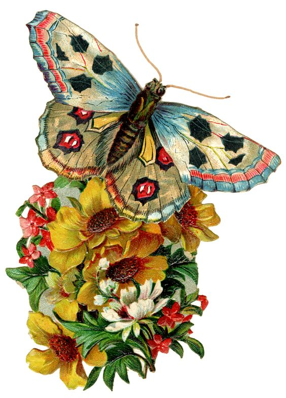Graphic of the day Vintage Butterfly.