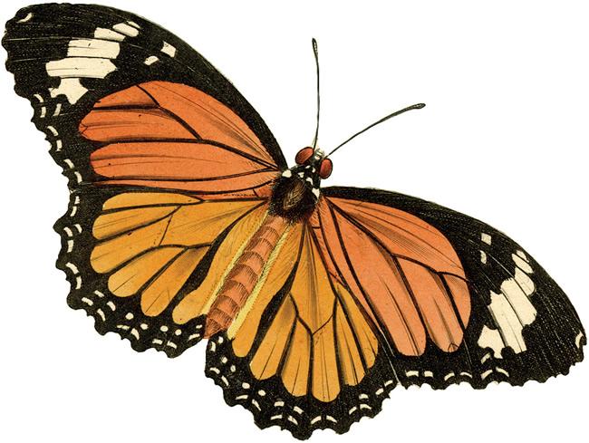 Vintage butterfly clip art.