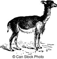 Vector Clipart of Alpaca or Vicugna pacos vintage engraving. Old.