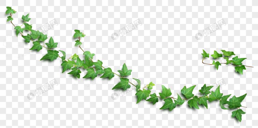 hojas verdes de vid Imagen Descargar_PRF Gráficos.