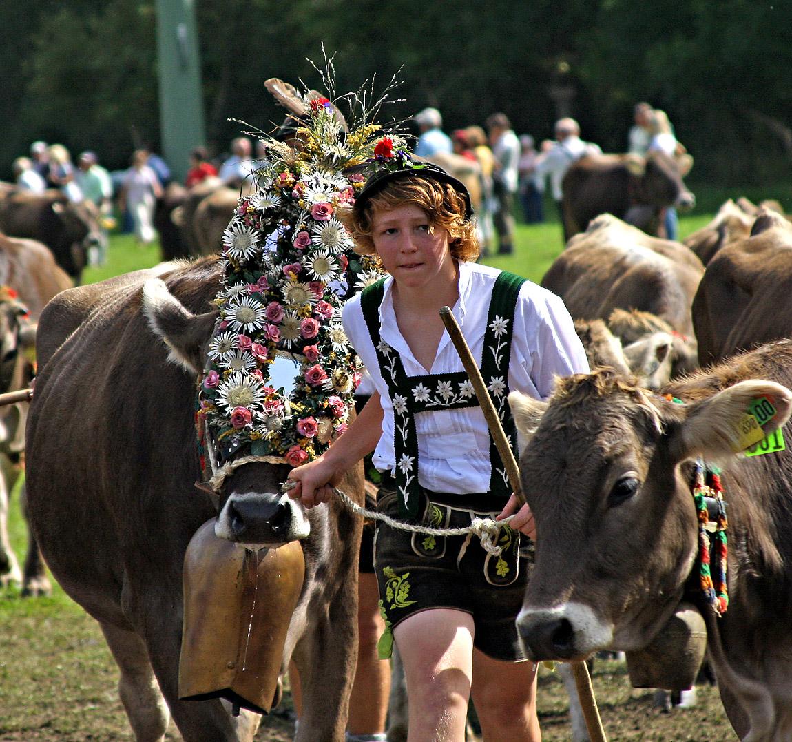Viehscheid im #Allgäu. Der Viehscheid ist im Allgäu ein fest.