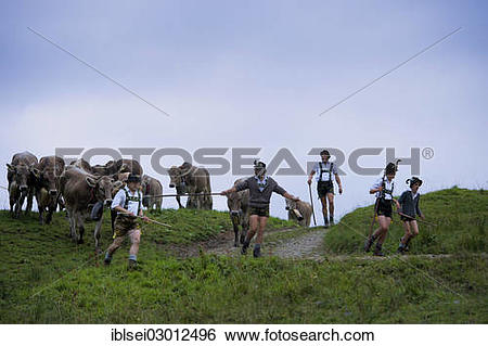 "Stock Images of ""Shepherds with a herd of cattle during the."