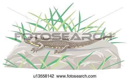 Clip Art of Gecko on rock, high angle view u13558142.