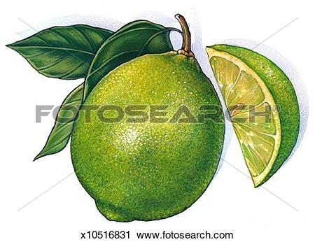 Clipart of Lime x10516831.