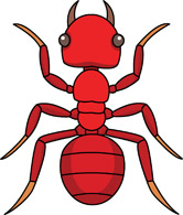 Free Insect Clipart.