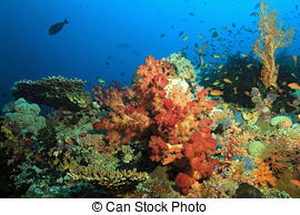 Stock Photo of Raja Ampat.