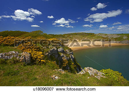Picture of Wales, Pembrokeshire, Barafundle Bay. View over.