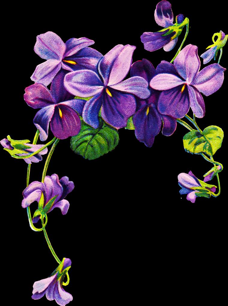 african violets border clip art.