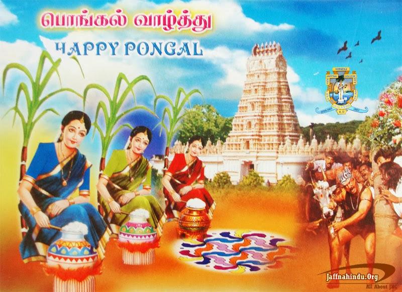 Pongal festival clipart.