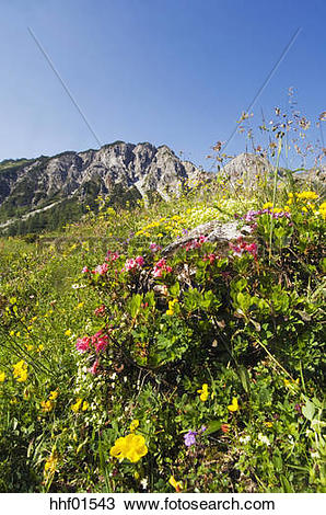 Stock Photo of Pasture in mountains hhf01543.