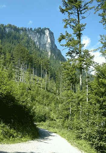 der Weg zur Vilser Alm mit dem Alpstrudel.
