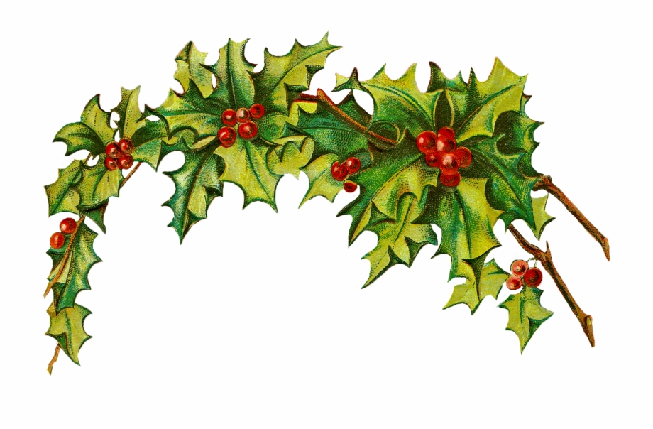 Free Christmas Holly Transparent Background, Download Free.