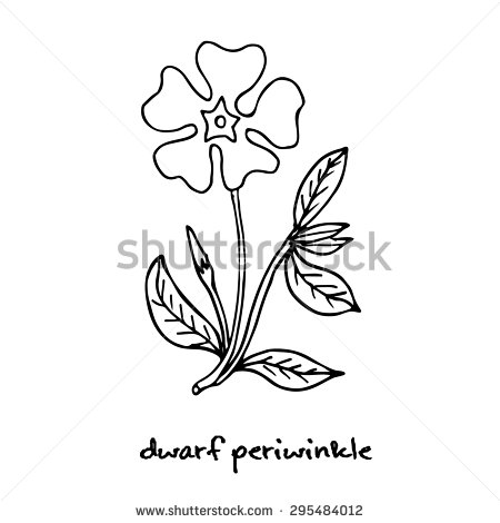 Vinca Minor Clipart.