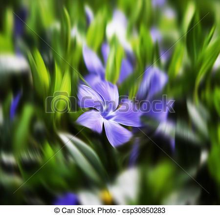 Pictures of flower vinca minor.